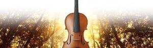 バイオリンのベスト鑑賞ポイント